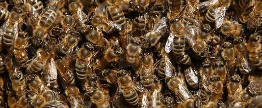 christoph heibl beekeeping. Black Bedroom Furniture Sets. Home Design Ideas
